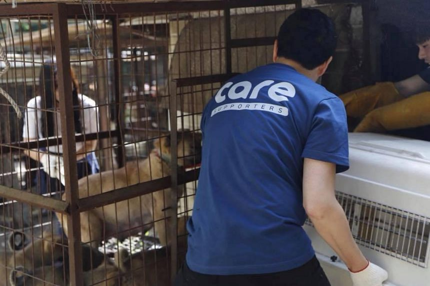 The leader of Coexistence of Animal Rights on Earth has been accused of secretly exterminating hundreds of rescued dogs to ensure a continued stream of donations.