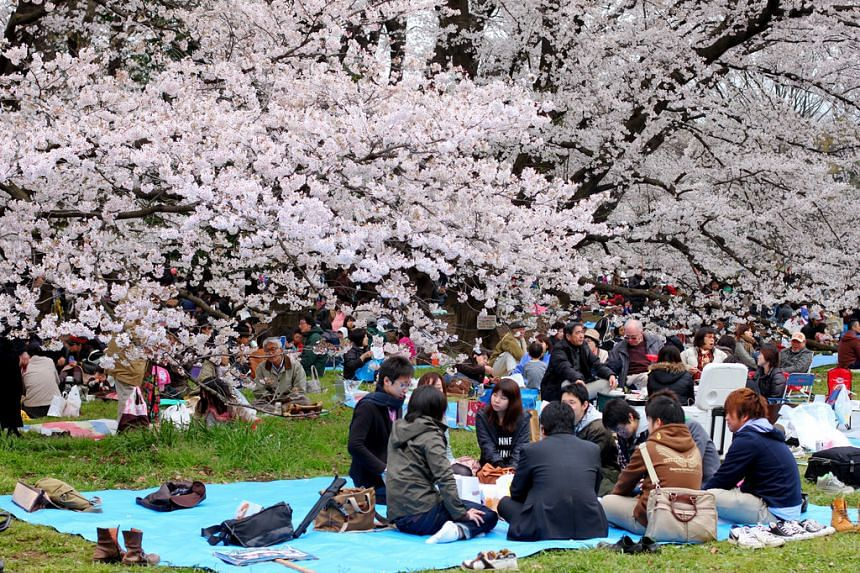 The first sightings of cherry blossom flowers in Japan are expected as early as March 18, 2019.