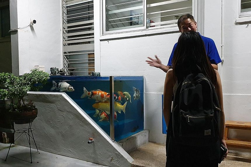 The owner of the flat enclosed the area surrounding the steps up to his ground-floor unit to form a glass tank housing around a dozen pet fish. HDB says the tank's position poses safety concerns.