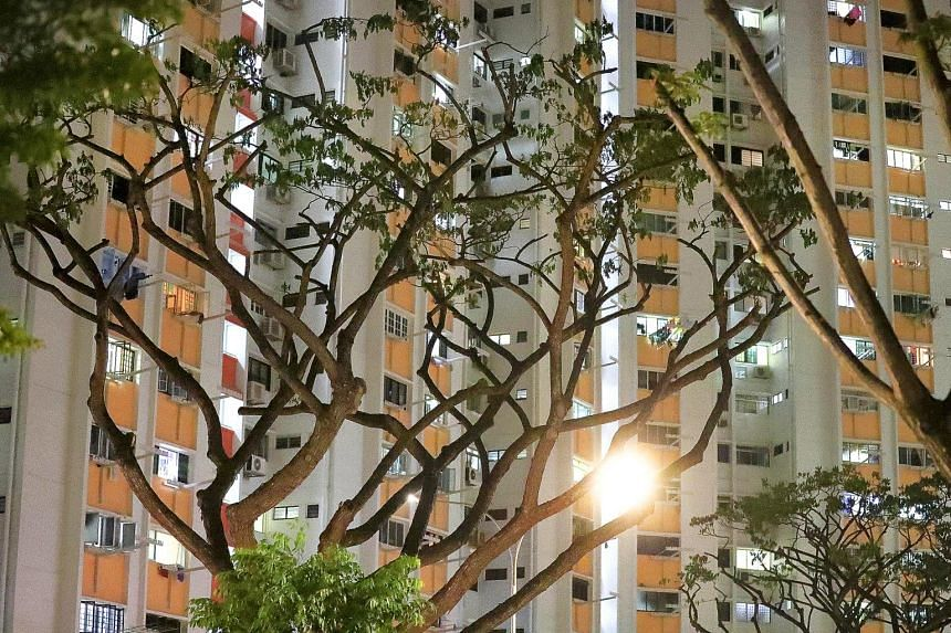 Besides pruning the trees and expecting the mynahs to disperse to non-residential areas, Minister for National Development Lawrence Wong added that a second, longer-term measure is to replace the current roost trees with tree types that are less pref