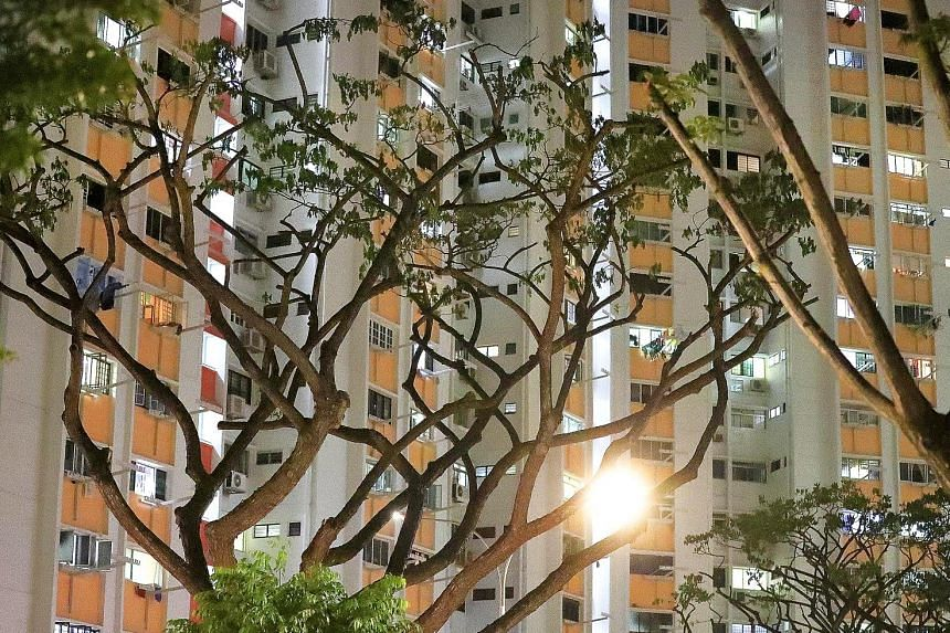 Some 300 trees in the vicinity that the mynahs roost on are being pruned in stages, said Potong Pasir MP Sitoh Yih Pin. Minister for National Development Lawrence Wong said that besides pruning trees, a longer-term measure is to replace the current t