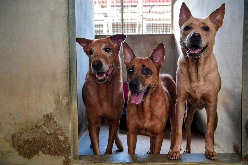 Curb pet sale, make selling of rescued animals mandatory