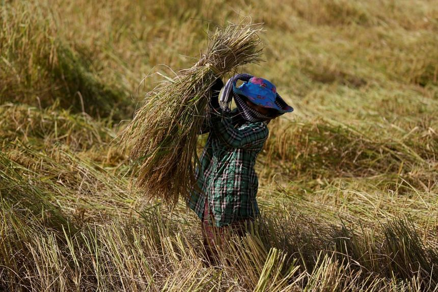 According to government data, nearly half of Cambodia's 625,000 tonnes of exported rice went to EU markets last year.