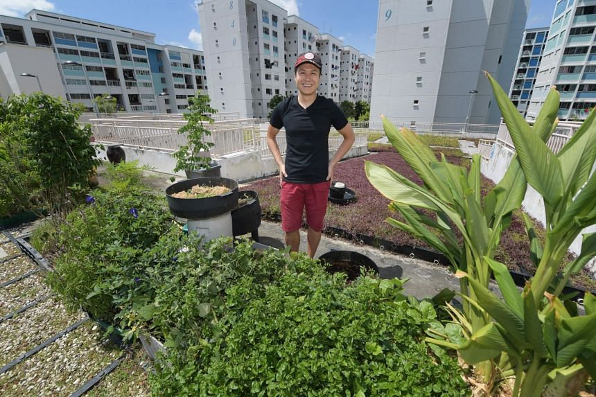 In a 1m by 4m raised garden bed on the rooftop of a multi-storey carpark in Yishun, civil servant Ong Chun Yeow grows mani cai, ulam raja, butterfly pea plant and Malabar spinach, among other edible greens.