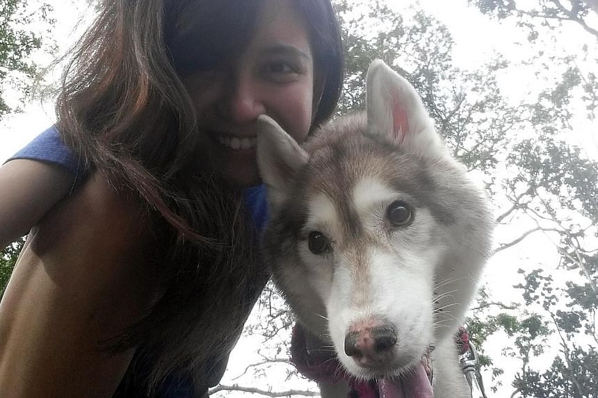 Video producer Denise De Cruz, 25, spent almost $30,000 to treat her Siberian husky Cody who was diagnosed with cancer. The treatment included three blood transfusions. Cody died last November and Miss De Cruz did not regret footing the hefty medical