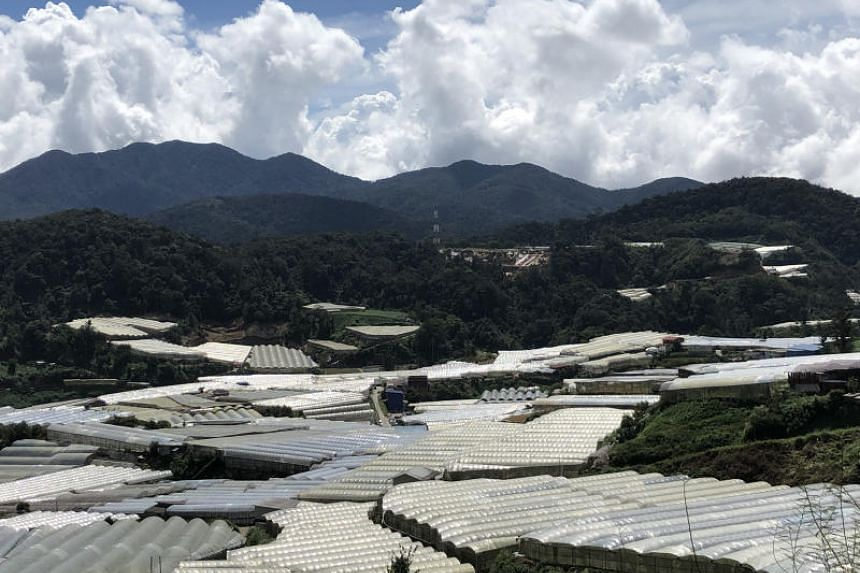 White plastic roofs covering cultivated land have sprouted up across what was once a green landscape of rainforest in the Blue Valley region in Cameron Highlands.