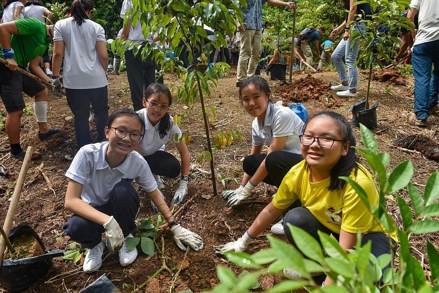 Secondary 3 students from Nanyang Girls' High School Nature Society (from left) Koh Wei Ying, Karis Soh Hui, Rebecca Bo and Ng Shi Hui, all 14, planting trees in Rifle Range Nature Park yesterday. The National Parks Board aims to protect and restore