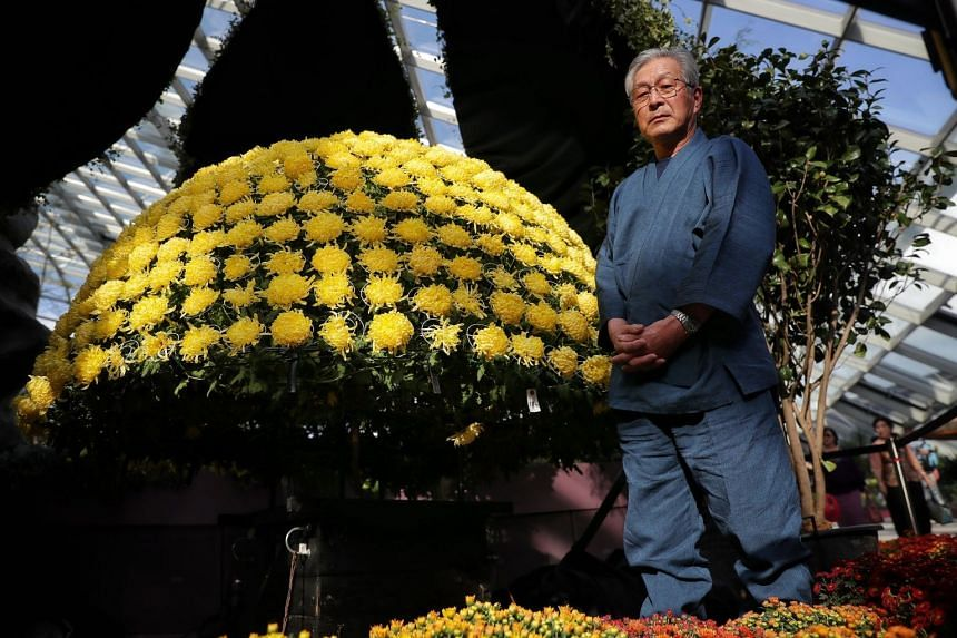 Mr Shinichi Suzuki, who is skilled in the Japanese flower cultivation technique of senrinzaki, set up three chrysanthemum arrangements in the Flower Dome at Gardens by the Bay as part of the Dahlia Dreams floral exhibition.