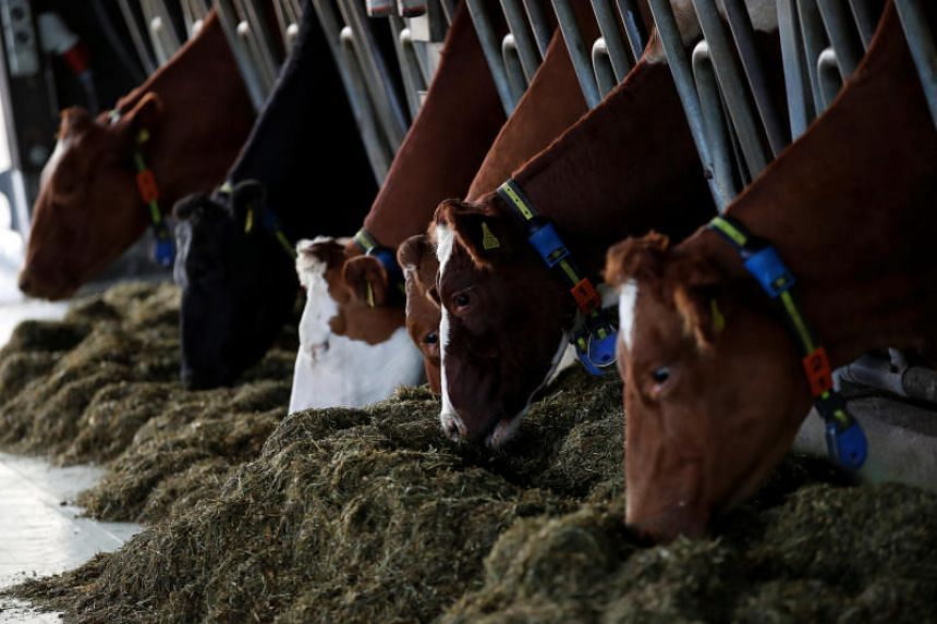 The outbreak occurred at the farm of 120 cows in Anseong city, south-east of Seoul.