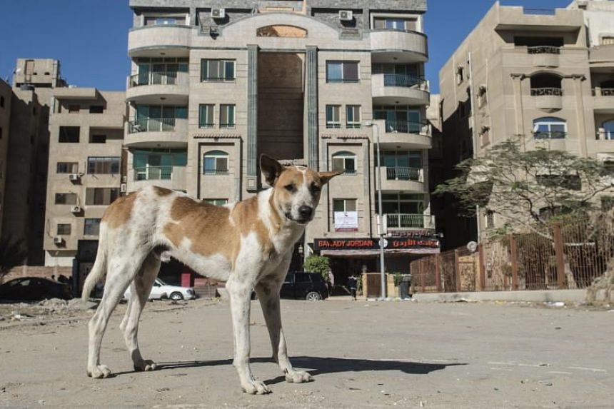 """Commonly referred to as """"baladi dogs"""", strays are widely viewed as unsanitary and dirty. They are typically seen running around the streets and scavenging garbage for food."""