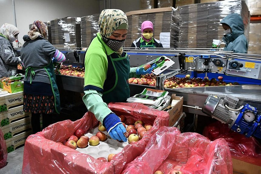 A collection truck pouring food waste into a bunker for treatment. Workers at food distributor Tian Sheng Fresh Produce packing apples and picking out rotting ones, which will be set aside as food waste that is combined with water sludge to be treate