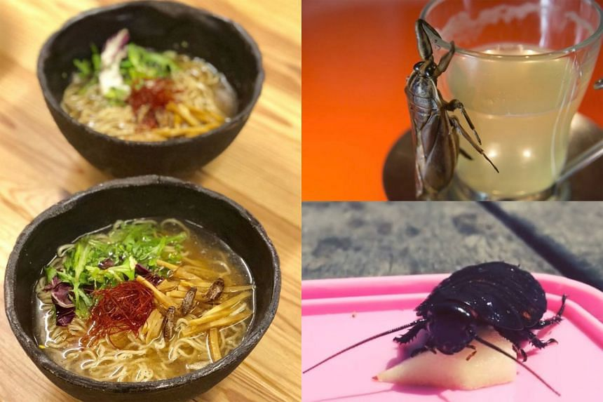 """Clockwise from left: Cricket ramen, an insect alcoholic drink, and Lisa, a cockroach from Africa that Mr Shinohara """"dated"""" for a year."""