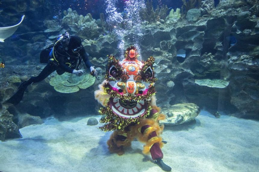 Two people put on the multi-coloured lion suit and performed in one of the tanks at Aquaria in Kuala Lumpur, as musicians played cymbals and drums outside.