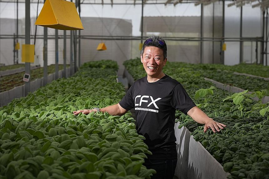 Mr David Tan runs CrowdFarmX, a digital platform that lets farmers monitor their farms anywhere in the world with their smartphones. With blockchain technology, they can sell their products without a middleman.