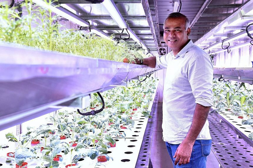 Mr Veera Sekaran of VertiVegies, which grows vegetables in clean rooms housed in Singapore's largest indoor farming facility.