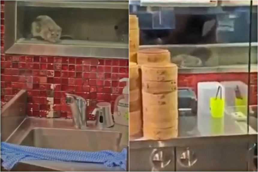 The rodent was captured on video running across the counter-top of the outlet at Westfield Sydney shopping mall in Pitt Street.