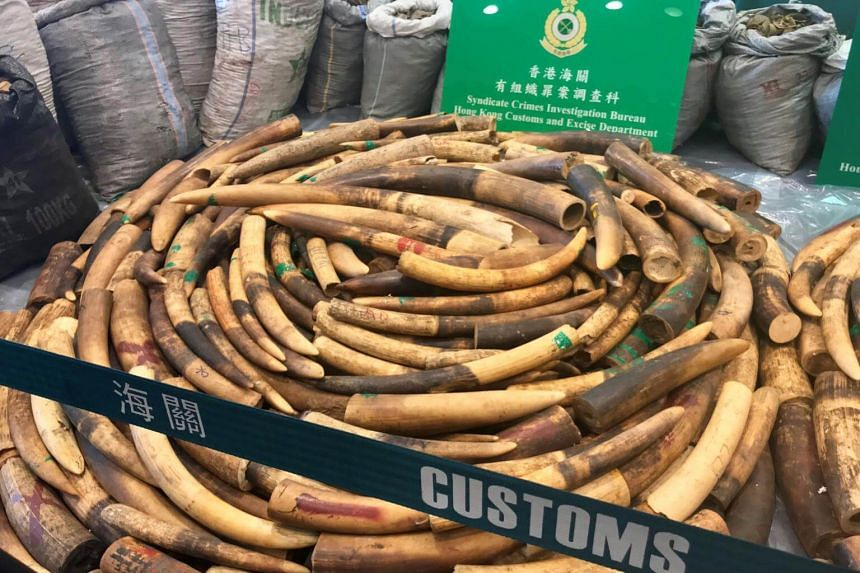 Customs seized about 8,300kg of pangolin scales and 2,100kg of ivory tusks at the Kwai Chung cargo port located in the former British colony on Jan 26, 2019.