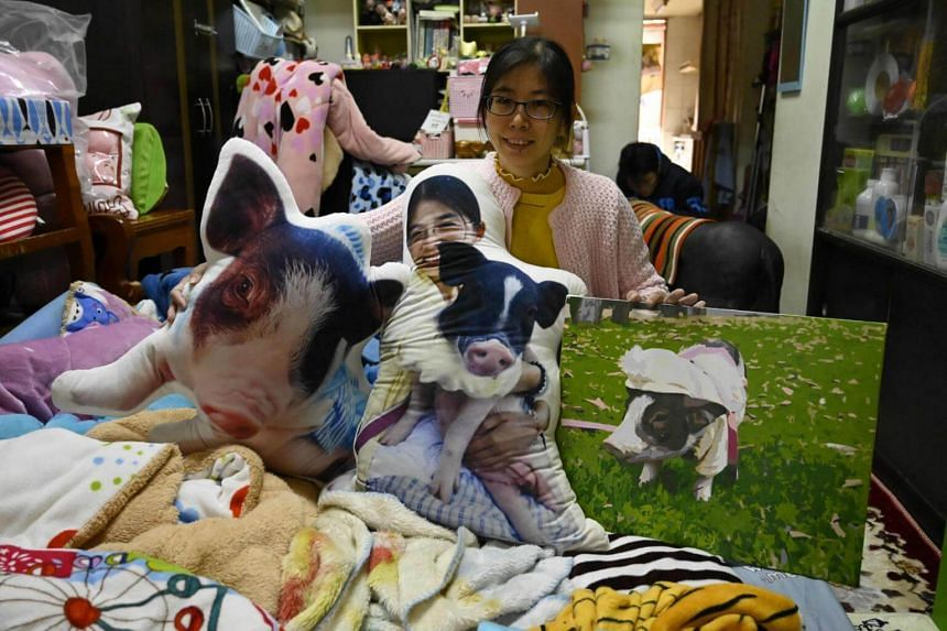Jenny Tsai posing with pillows with pictures of her pet pigs in her apartment in Taichung, central Taiwan.