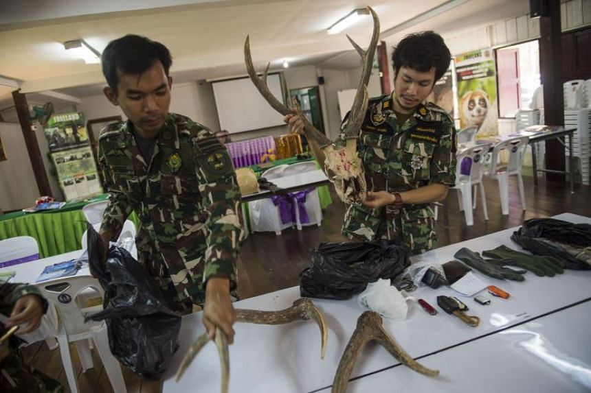 "Thai forest ranger Kritkhajorn Tangon (right, gathering deer antlers and other seized materials from ""poachers"" after a mock raid in in Khao Yai National Park, Nakhon Nayok province, as part of training to tackle wildlife crime on Feb 1, 2019."