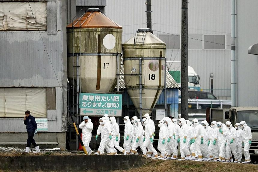 Japanese soldiers and local government officials began slaughtering around 6,600 pigs at a farm in Toyota City in Aichi prefecture following the confirmation of an outbreak of swine fever.
