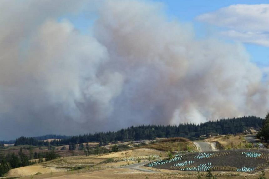 Smoke rising from a forest fire in Mahana, near Nelson, New Zealand, on Feb 5, 2019.