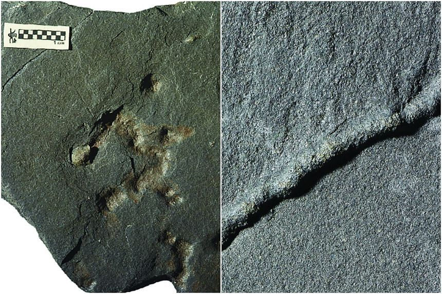 Photos released by the CNRS of the Poitiers Universite show fossil traces of movement in a 2.1 billion year-old rock.