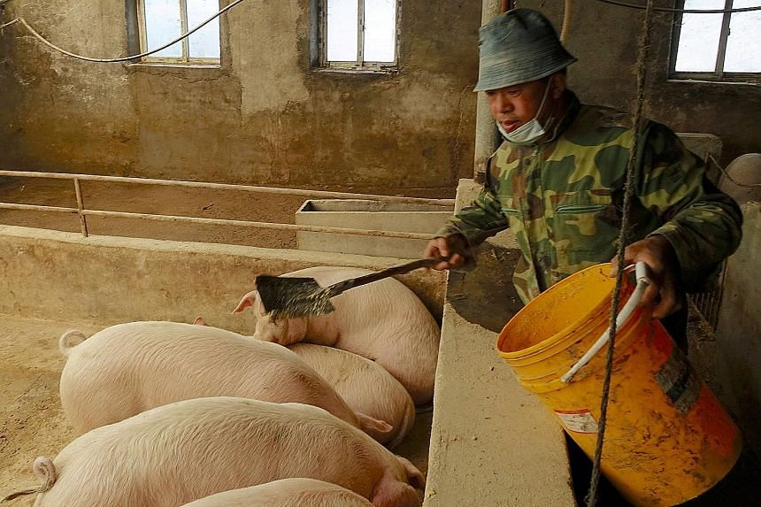 A pig farm in Liaoning province, China. The likelihood of higher pork prices as the African swine fever dents supply could have played a part in driving up the pig farmers' performance on the exchange index, say analysts.