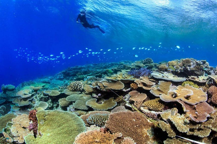 The reef has experienced mass coral bleaching events, a phenomenon whereby warm waters cause corals to expel the symbiotic algae living in their tissues and turn completely white, in each of the last two summers.