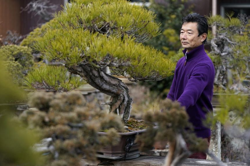 Fifth-generation bonsai cultivator Seiji Iimura in his garden in Saitama on Feb 13, 2019. He and his wife were grief-stricken by the loss of their beloved miniature trees.