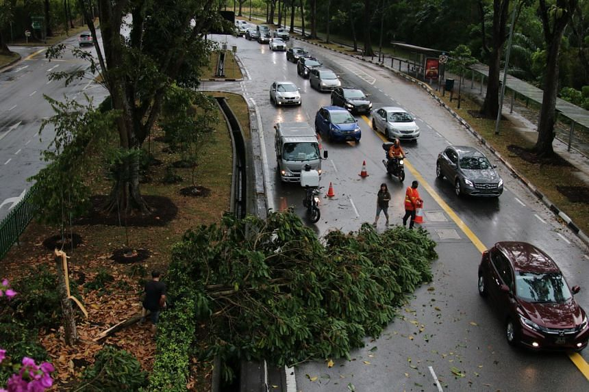 One of the trees lay across two of the three lanes of the road, obstructing the flow of traffic headed in the direction of Yishun. This caused a long line of cars to form.