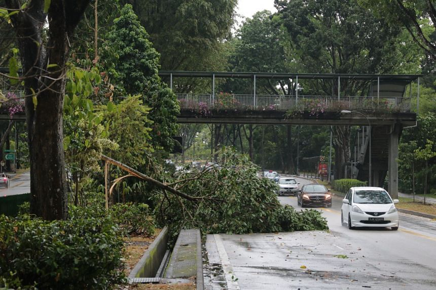 While the cause of the fallen trees is still unclear, there were strong winds and heavy rain in the afternoon.