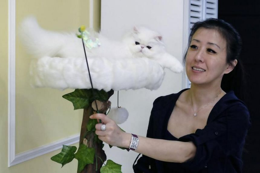 Two kittens were stolen from Taiwanese cat breeder Chang Chin-yi on Feb 5, 2019.