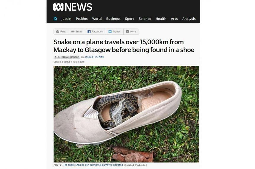 The snake had hidden in Ms Boxall's shoe, which had been packed inside the suitcase.