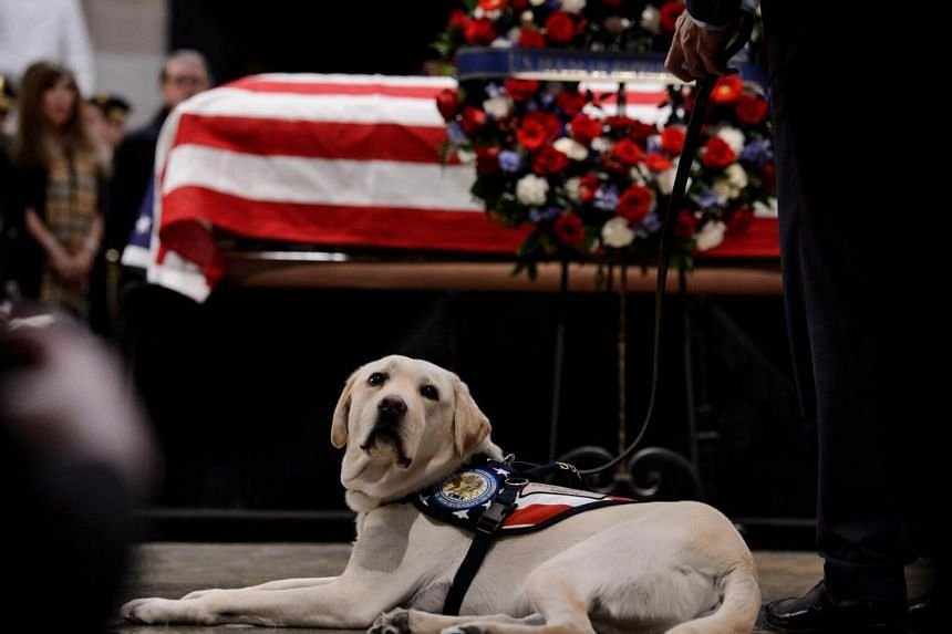 Sully became famous as canine caretaker and constant companion to former president George H. W. Bush in the final stages of his life.