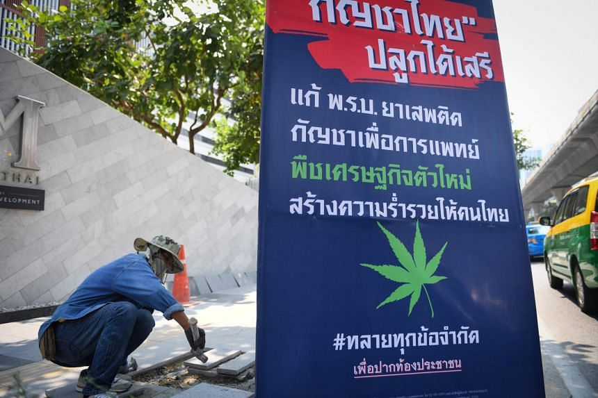 Campaign posters for the Bhumjaithai (Proud to Be Thai) party, the first major party to advocate its recreational use, feature an oversized green marijuana leaf.