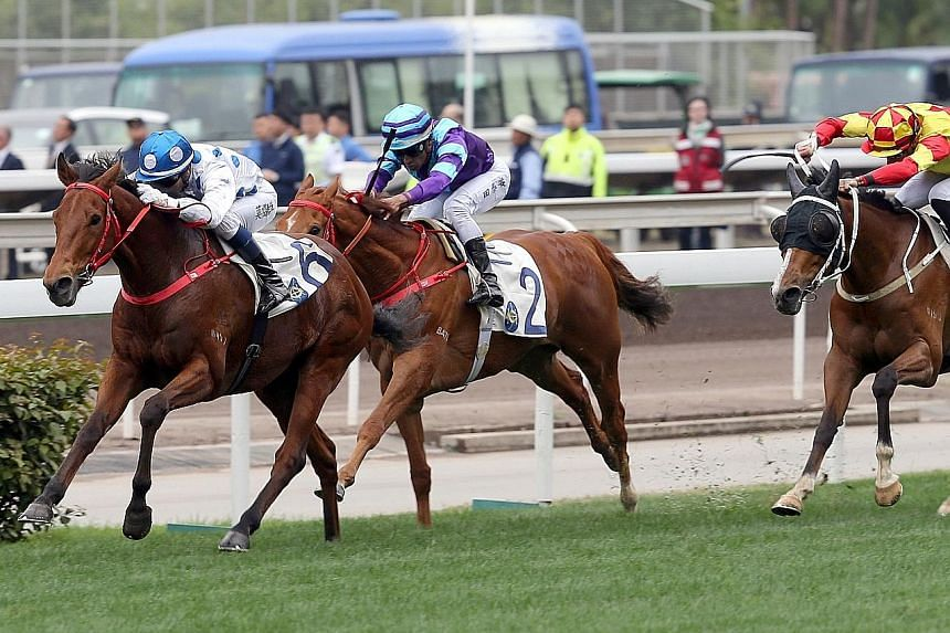 The Hong Kong Derby-bound Enrichment (far left) should get a nice run in transit from barrier 7 under jockey Neil Callan in today's Race 9 at Sha Tin.