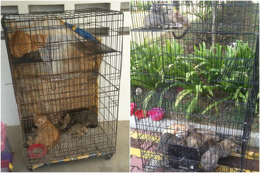 Sixteen cats were left in cages at Block 222A Sumang Lane in Punggol on March 1, 2019.