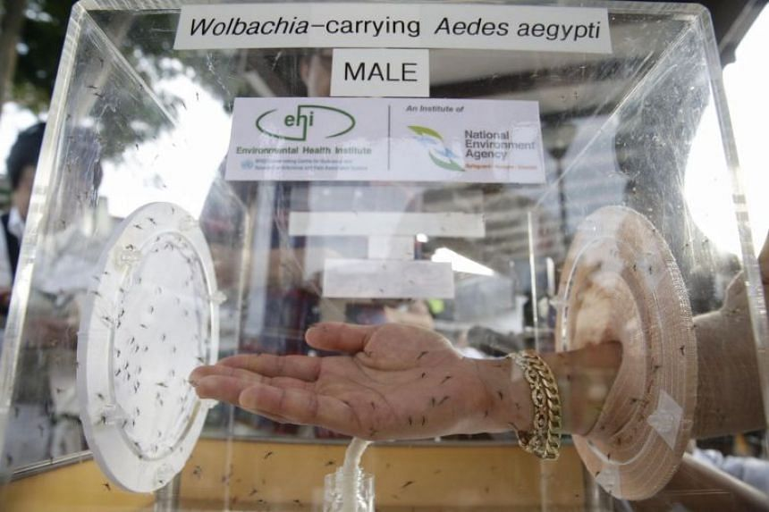 When a male Wolbachia-Aedes mosquito mates with a female Aedes mosquito, the eggs produced will not hatch, limiting the number of mosquito larvae each female Aedes mosquito can produce.