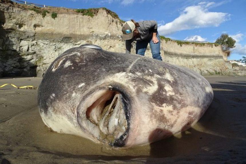 sunfish beach ile ilgili görsel sonucu