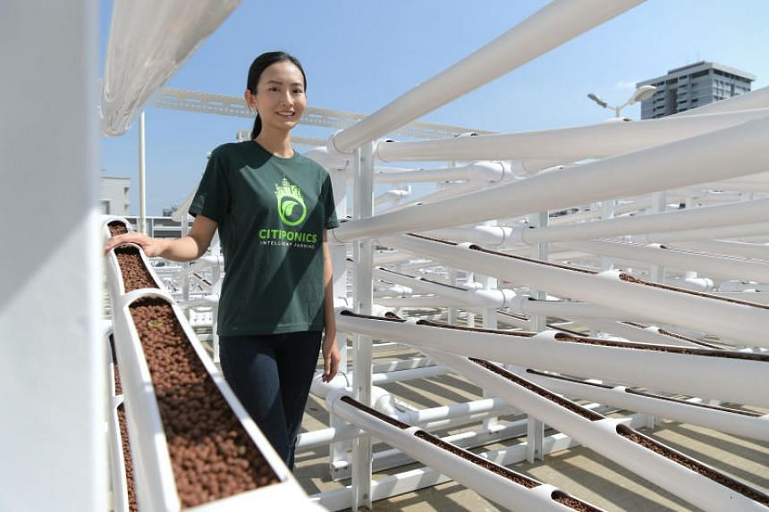 Danielle Chan from Citiponics at the new Citiponics Farm @ Ang Mo Kio.