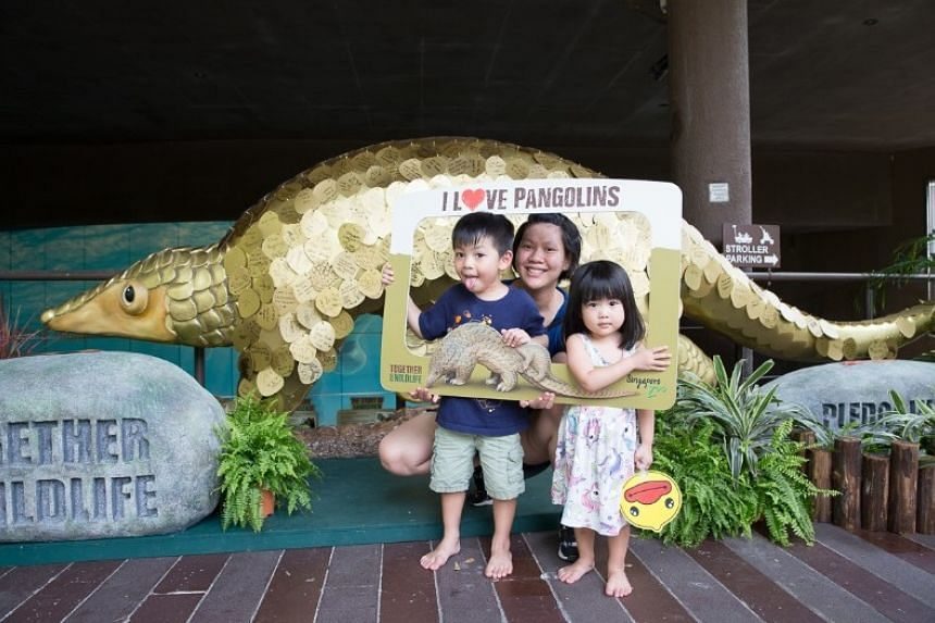 Join WRS in scaling up the love for Pangolins this March. PHOTO: WILDLIFE RESERVES SINGAPORE