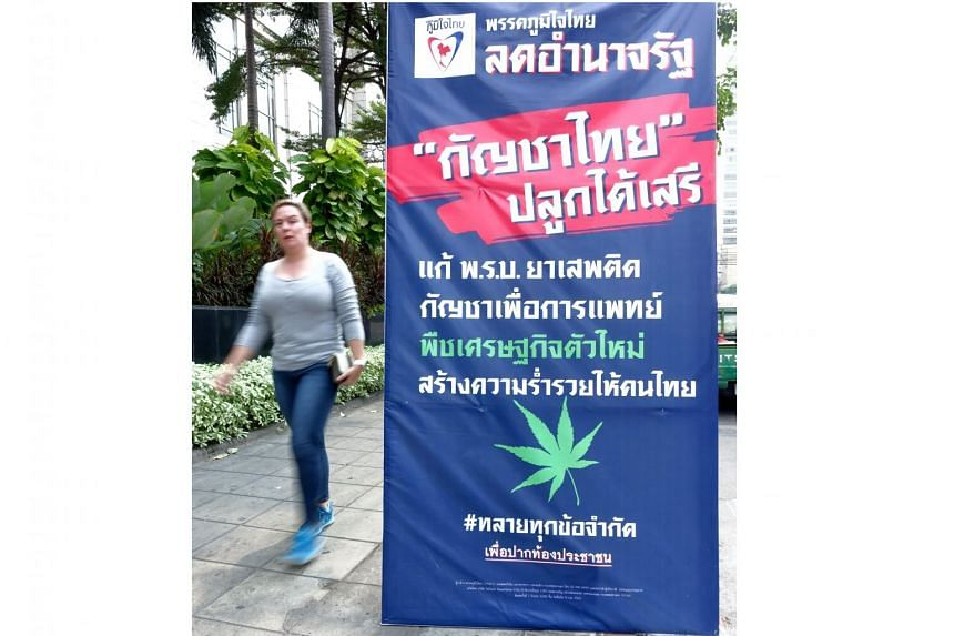A woman walking past a Bhumjaithai Party election poster advocating more relaxed regulations that would turn marijuana into Thailand's next cash crop.