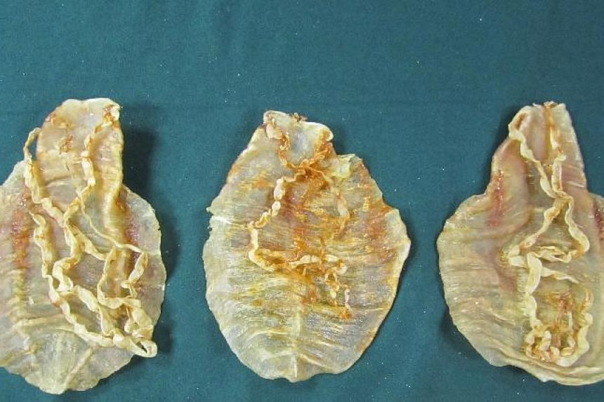 The swim bladder of the critically endangered totoaba fish can fetch up to US$20,000 on the black market in China, where it is believed to have beautifying properties and cure a host of ailments.
