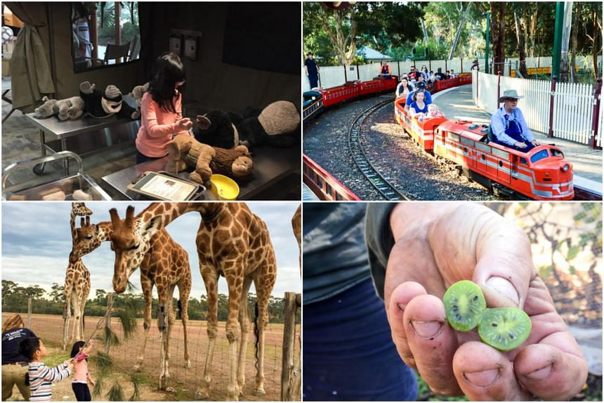 Melbourne is filled with family-friendly experiences, with zoos, farms and museums to keep the little ones occupied.