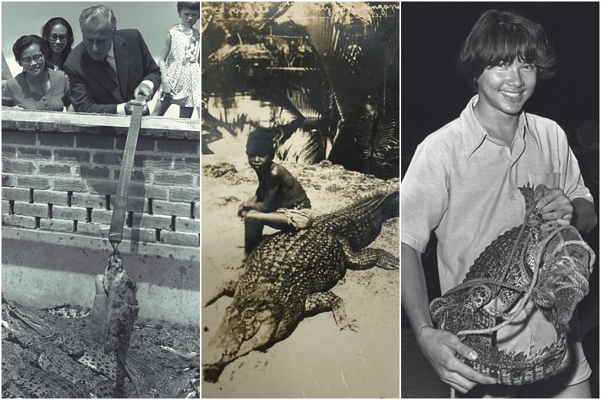 "(From left) Earl Mountbatten at the Tan Moh Hong Reptile Skin Farm at Serangoon Road, during a visit to Singapore in February 1972; Postcard with a photograph titled ""Crocodile & Malay Boy, Singapore"" with the photo taken in the 1920s; A 1.3m long ba"