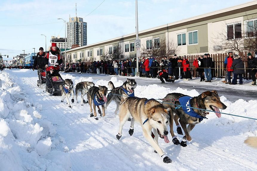 Aliy Zirkle and her dogs head out at the ceremonial start of the 47th Iditarod Trail Sled Dog Race in Anchorage.