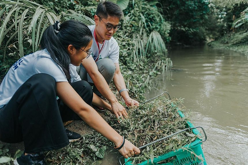 Students from Thailand and Brunei rinsing weeds yesterday at eco-farm Ground-Up Initiative in Yishun. The weeds were to be used for composting.