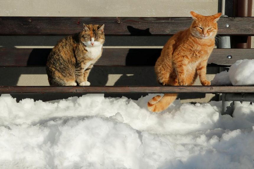 Winter is rough for stray animals as they require extra calories to stay warm.