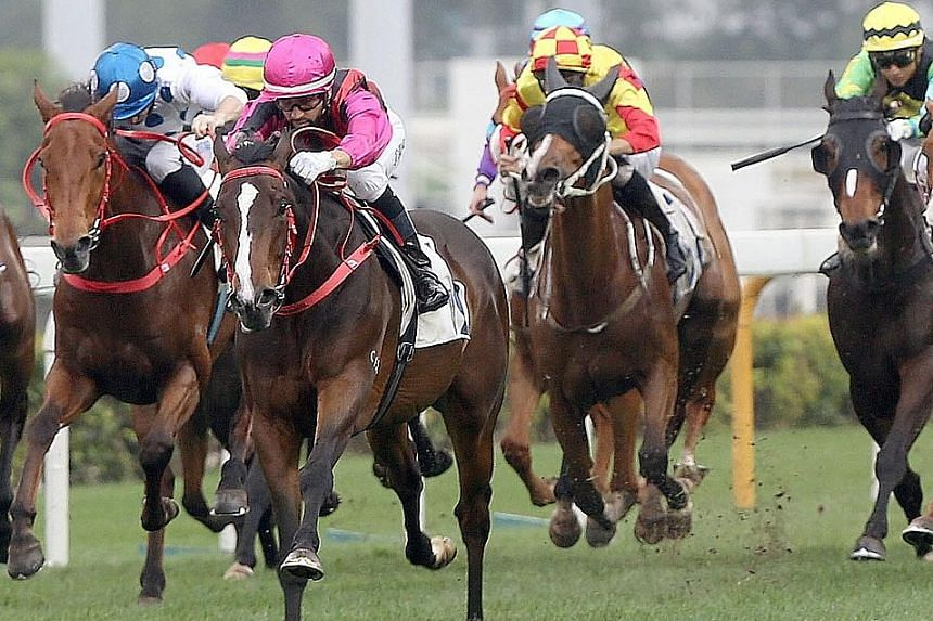 Waikuku (pink cap), a winner of his last four starts, is shaping up as the hardest to beat in tomorrow's Hong Kong Derby.