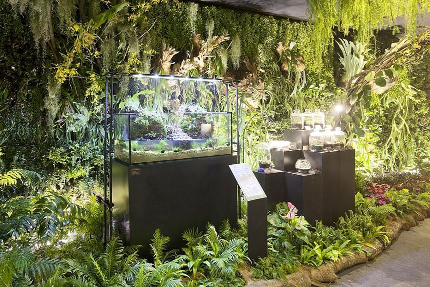 A terrarium exhibit at last year's Singapore Garden Festival (SGF). This year's SGF Horticulture Show will also feature terrariums.